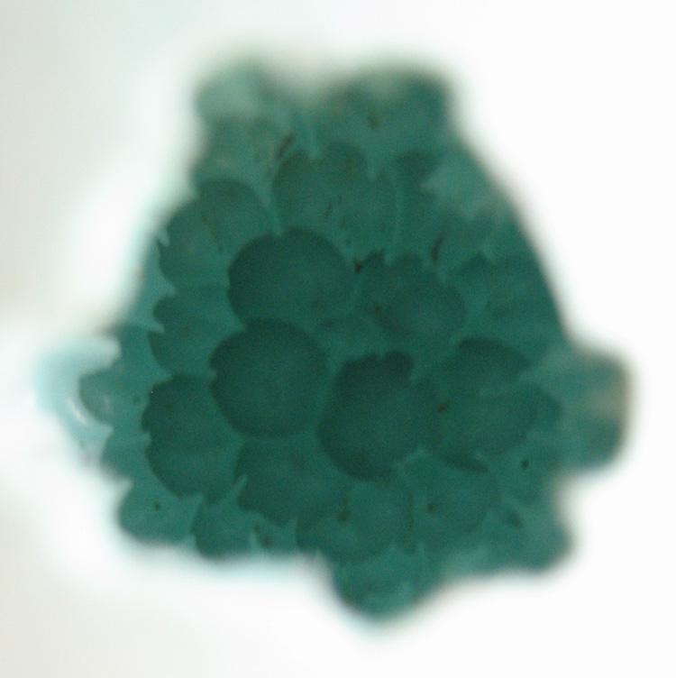 alveoles.jpg